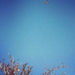editedbird
